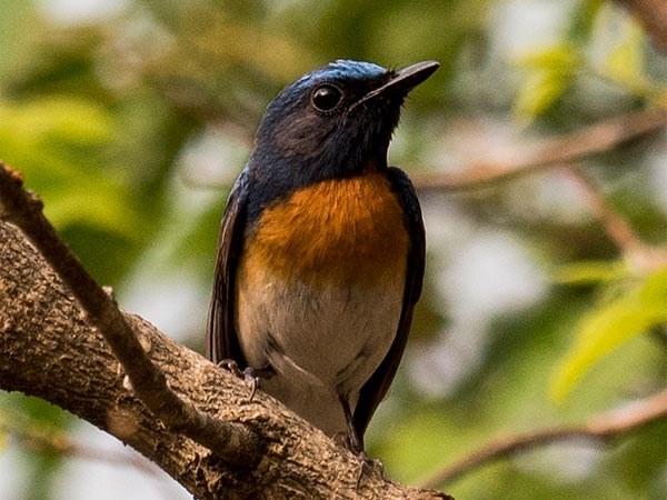 Chintamani Kar Bird Sanctuary, West Bengal