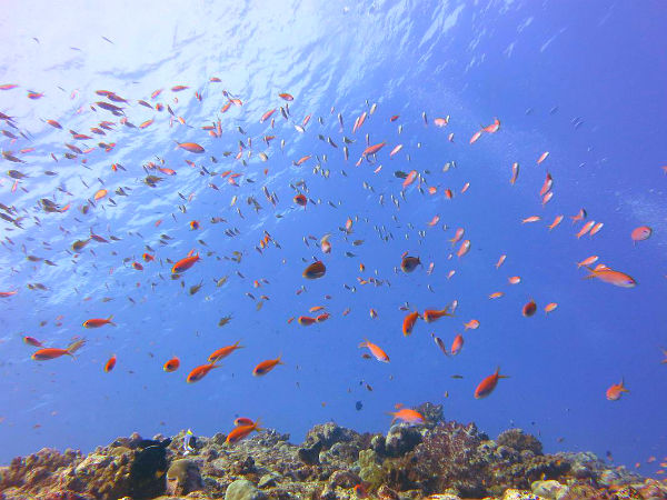 Discover The Beautiful Marine Life
