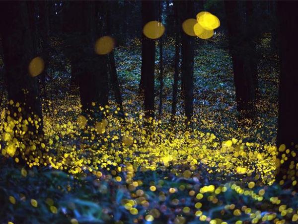 5 Best Places To Witness Fireflies Near Mumbai!