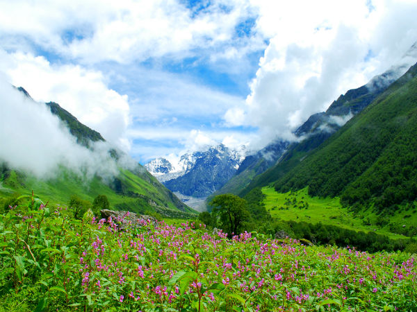 1. Valley Of Flowers National Park