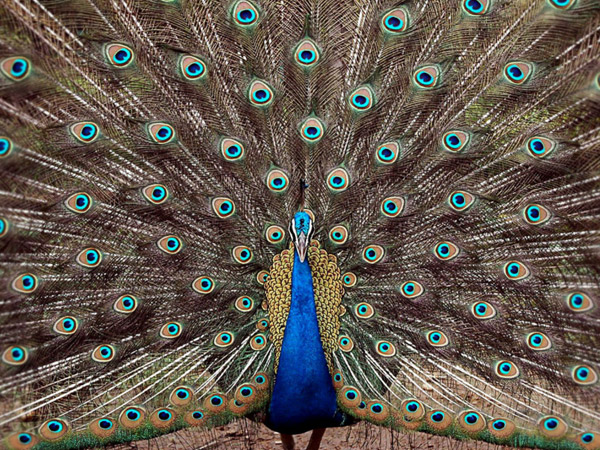 Choolanur Peacock Sanctuary, Kerala