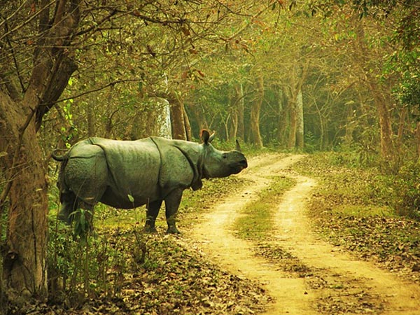 10 Best Things To Do To Experience The Essence Of Assam
