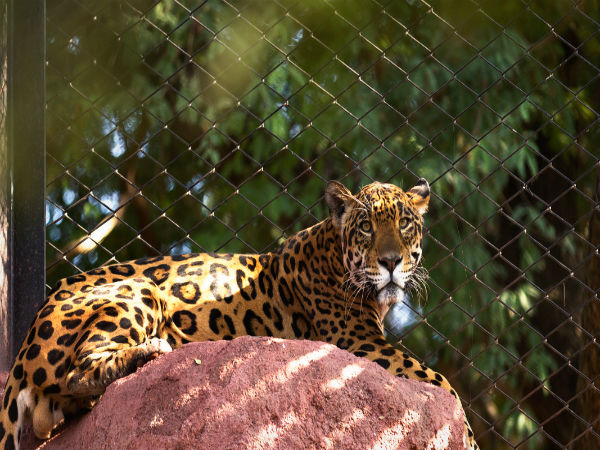 7. Jungle Safari At Nehru Zoological Park