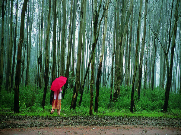 Also Read: The 7 Wonders Of Madhya Pradesh