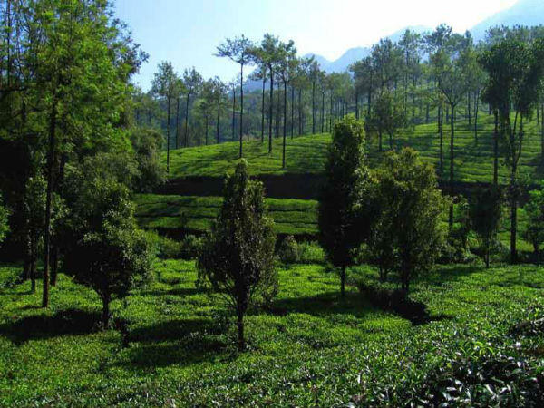 alternatives to munnar in kerala