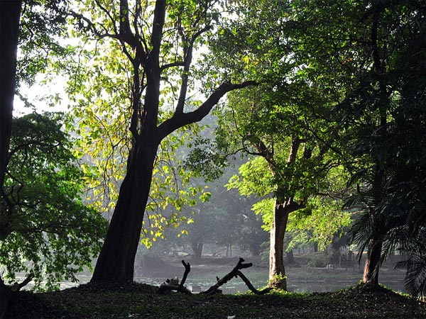Indian Botanical Garden, Kolkata