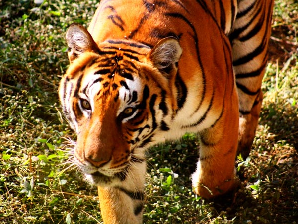 <strong>Also read:Top 6 Zoos In India That You Cannot Miss!</strong>