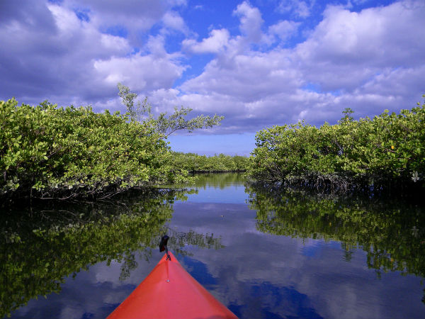 1. Mangrove Kayaking