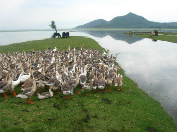 5. Wular Lake, Jammu And Kashmir