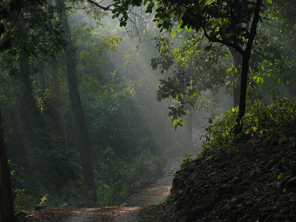 Things To Do In Jim Corbett National Park