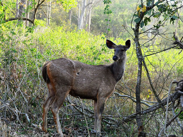 Destination: Rajaji National Park