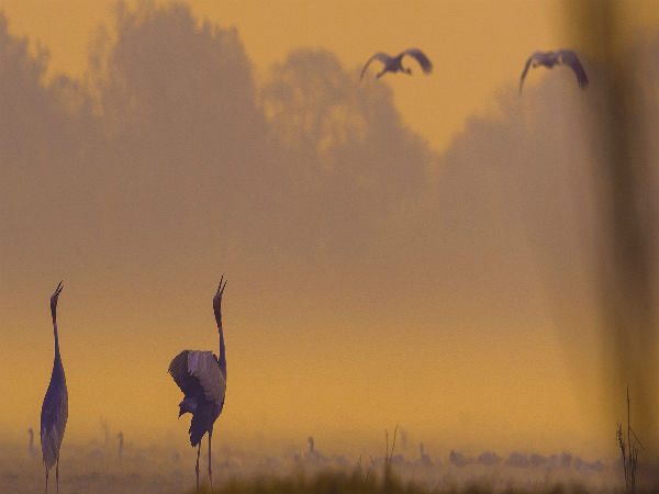 READ MORE ABOUT BHARATPUR BIRD SANCTUARY