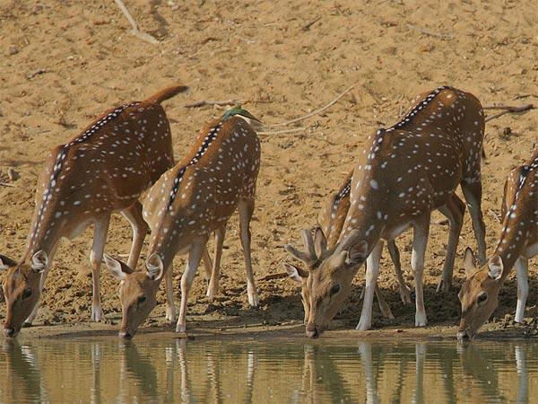 Read More About Hazaribagh Wildlife Sanctuary