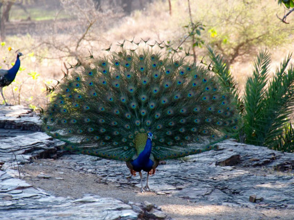 Things To Do At Ranthambore