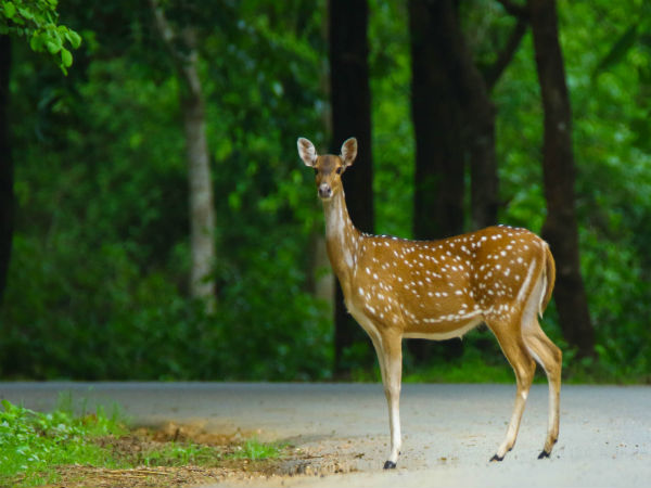 Places To Visit - Dandeli Wildlife Sanctuary