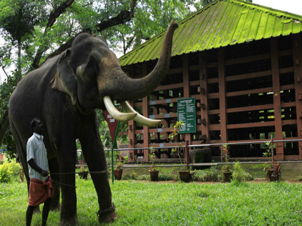 Konni Elephant Training Center