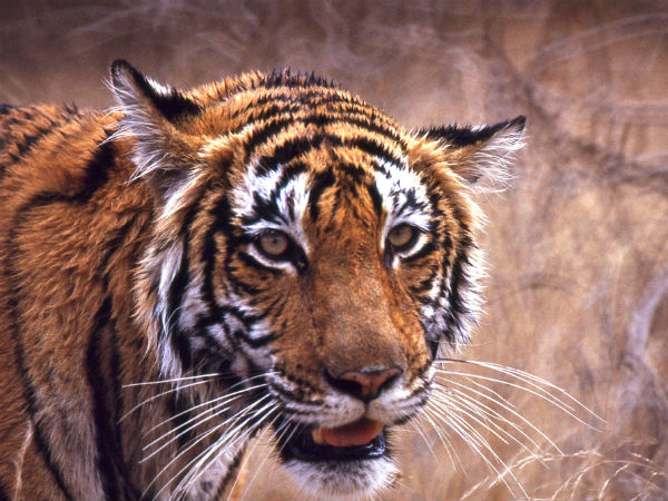 READ MORE ABOUT RANTHAMBORE NATIONAL PARK