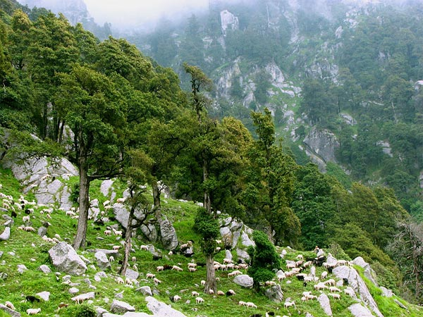 Attractions In And Near McLeod Ganj
