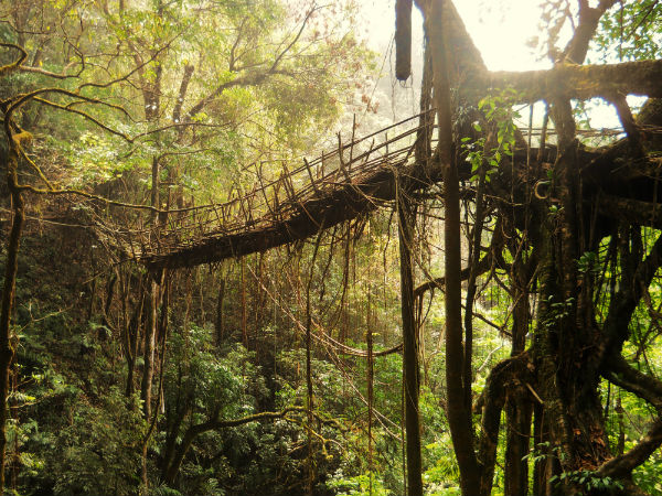 4. Living Root Bridges