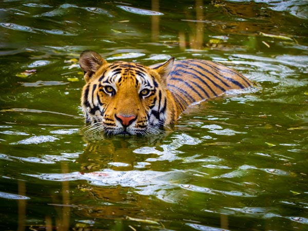 5. Sariska National Park