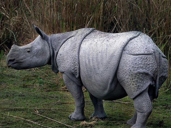 Spot Rhinos At Kaziranga