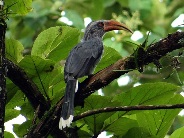 1. Karnala Bird Sanctuary