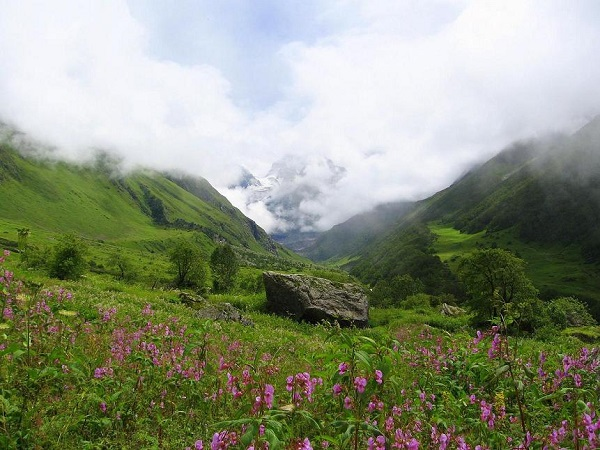2) Valley Of Flowers, Uttrakhand