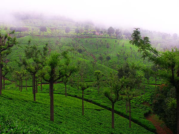Best Time To Visit Coonoor