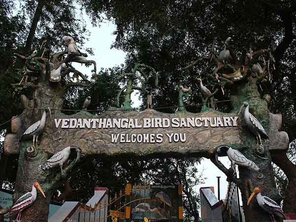 Best Time To Visit Vedanthangal Bird Sanctuary