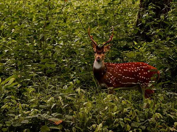 1) Meghamalai Wildlife Sanctuary