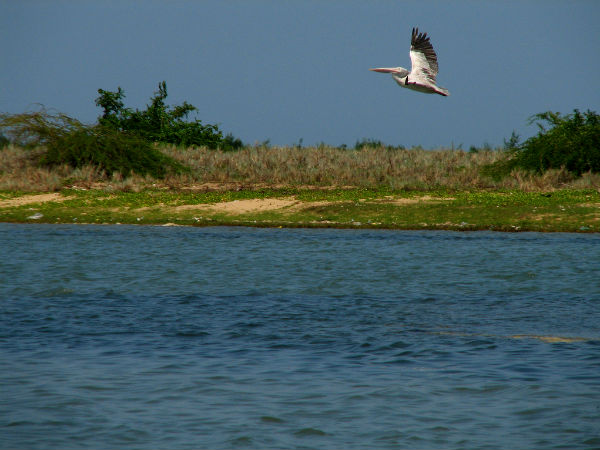 READ MORE ABOUT PULICAT