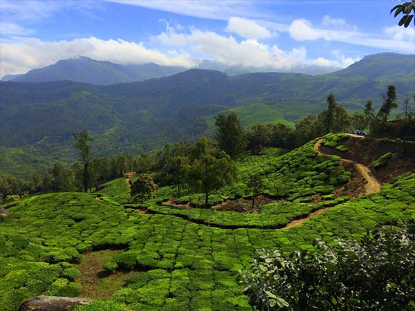 Best Season To Travel To Munnar