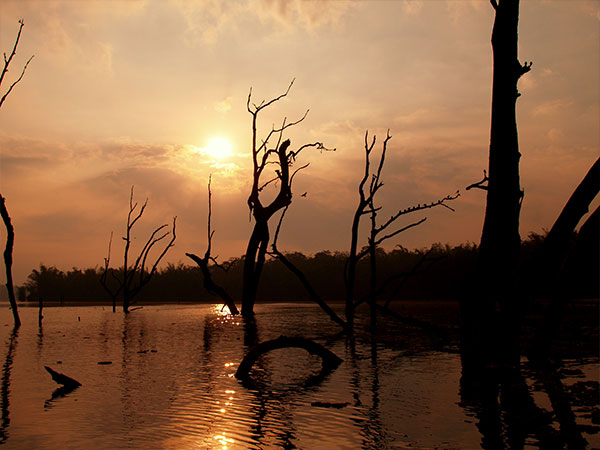 Best Time To Visit Kabini Wildlife Sanctuary