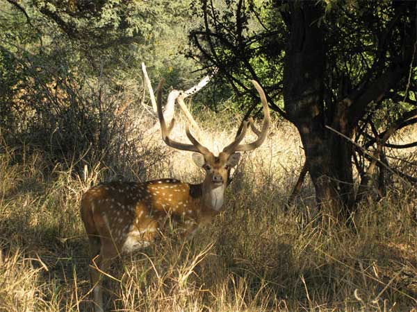 Best Time To Visit Kumbhalgarh Wildlife Sanctuary