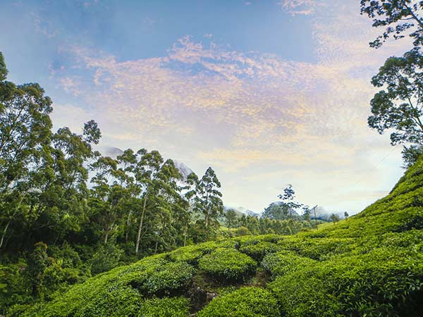 How To Reach Munnar
