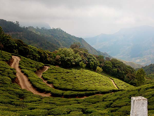 Final Destination – Munnar