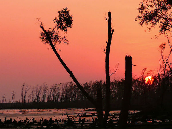 READ MORE ABOUT SUNDARBANS