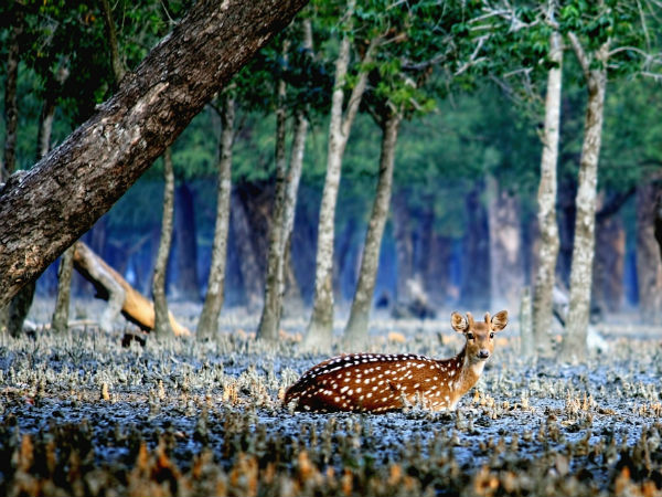 Final Destination – Sundarbans