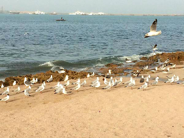Final Destination – Porbandar