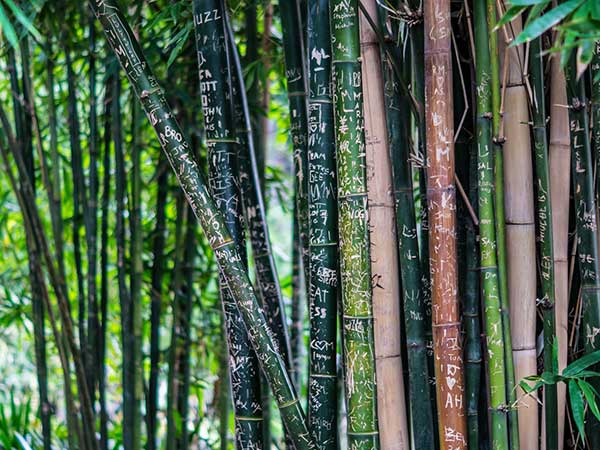 Bamboo Products And Fruit Plantations