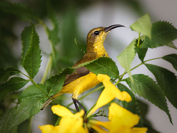 Vansda National Park