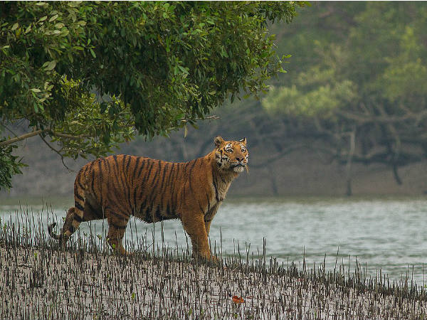 Wildlife Safari In Sundarbans