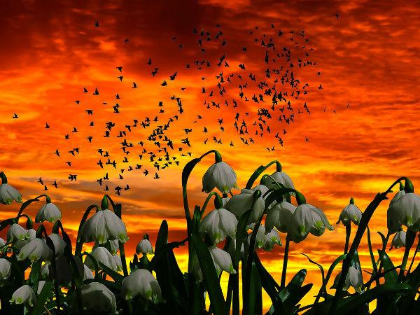 Mahananda Wildlife Sanctuary - A Paradise For Birdwatchers