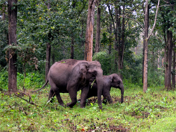 4. Wayanad Wildlife Sanctuary