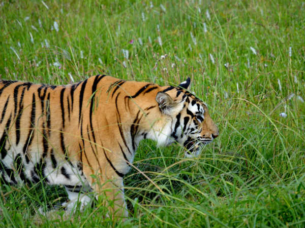 Flora And Fauna In Ranthambore National Park
