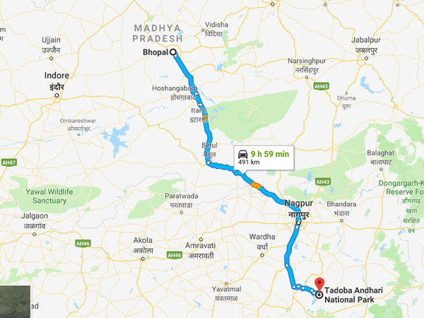 How To Reach Tadoba National Park From Bhopal