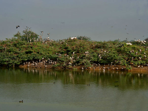 Best Time To Visit Uppalapadu Bird Sanctuary