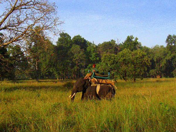 Final Destination – Kanha National Park