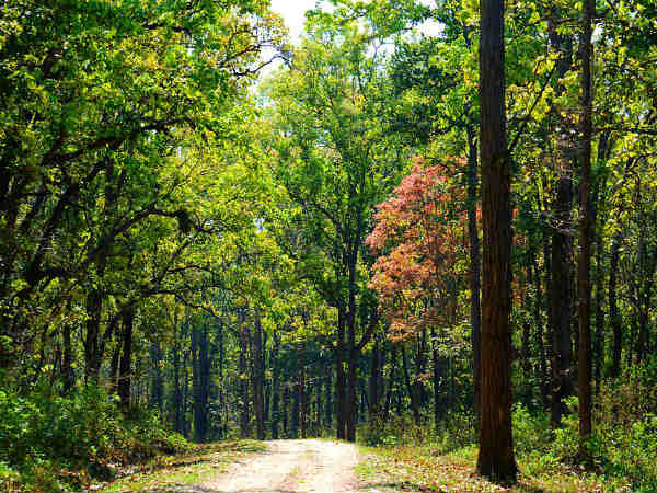 READ MORE ABOUT KANHA NATIONAL PARK