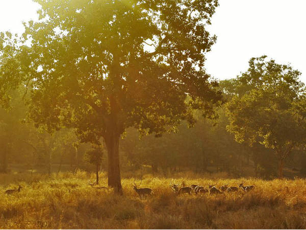 Best Time To Visit Pench National Park